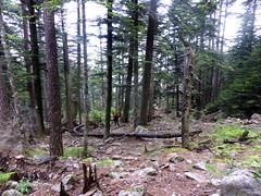 Descente de Bocca di Fumicosa sous la pluie : la forêt abimée par les tempêtes d'hiver