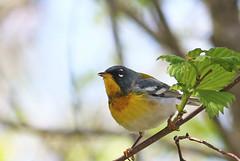 Top Bird Shots