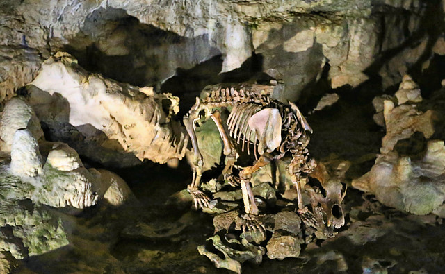 Bärenhöhle - Skelett vom Höhlenbär