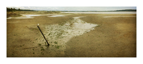 beach landscape sand bc seagull whiterock