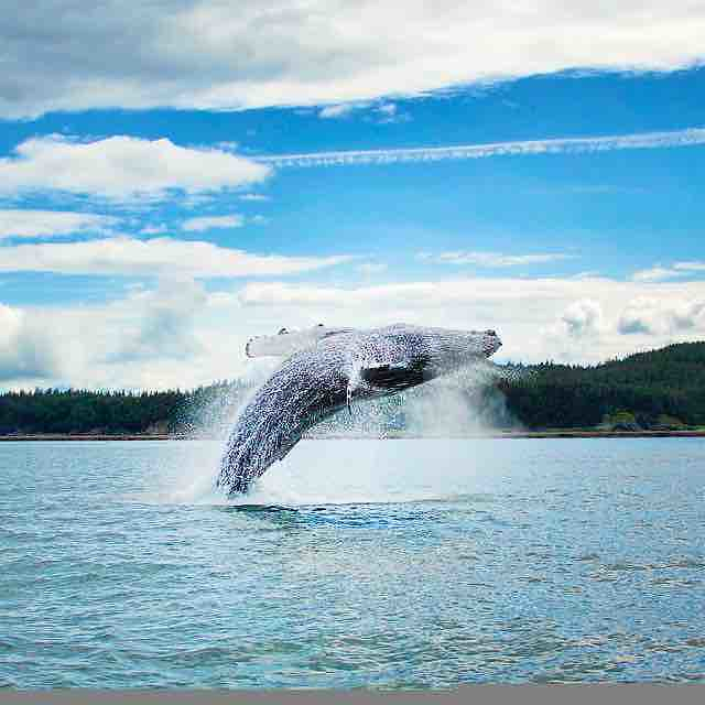 We do not only see with our eyes. We see with touch, with sound, with intuition. Like the whales!  Blessed by the whales yesterday for Brant Secunda's birthday on the Inside Passage during our Alaska Retreat.   #wonder #awe #nature #humpbackwhale #Jumping