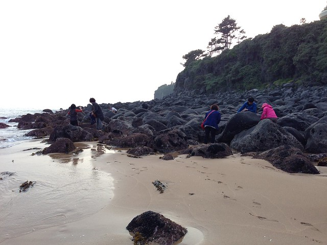 Ladies collecting conchs from beach
