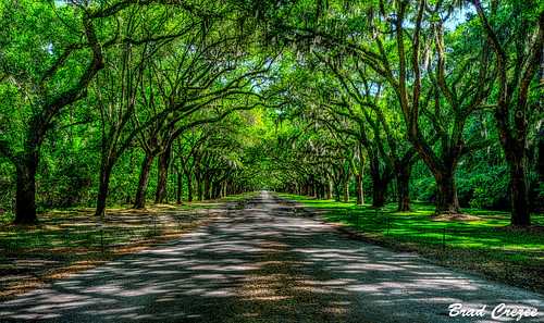 wormsloe georgia savannah oak trees road green nikon d800 2485mm hdr popularphotography bradcrezee