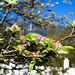 Apple tree enjoying spring by Sina Farhat