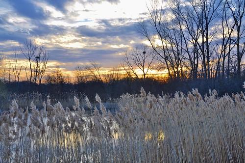 sunset usa grass reeds us illinois pond nikon nests d90 stevelamb heroncreek lakecount