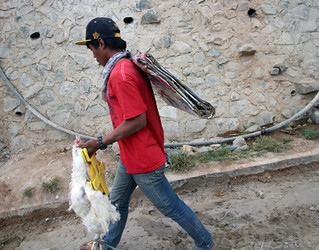 man in red shirt with a chicken