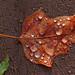 Leaf by West County Camera