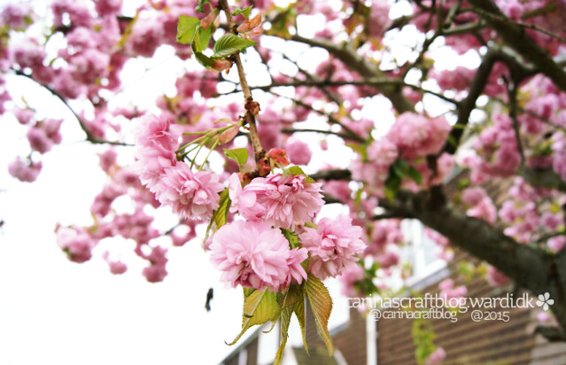Blossom tree in our garden