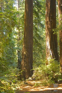Redwood Trail, Julia Pfieffer Burns State Park