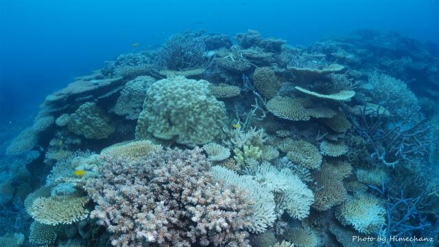 名蔵の極上サンゴたち!