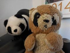 textile(0.0), teddy bear(1.0), mammal(1.0), giant panda(1.0), plush(1.0), stuffed toy(1.0), bear(1.0), toy(1.0),