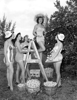 Young ladies in grove during the Key Lime Festival - Key Largo