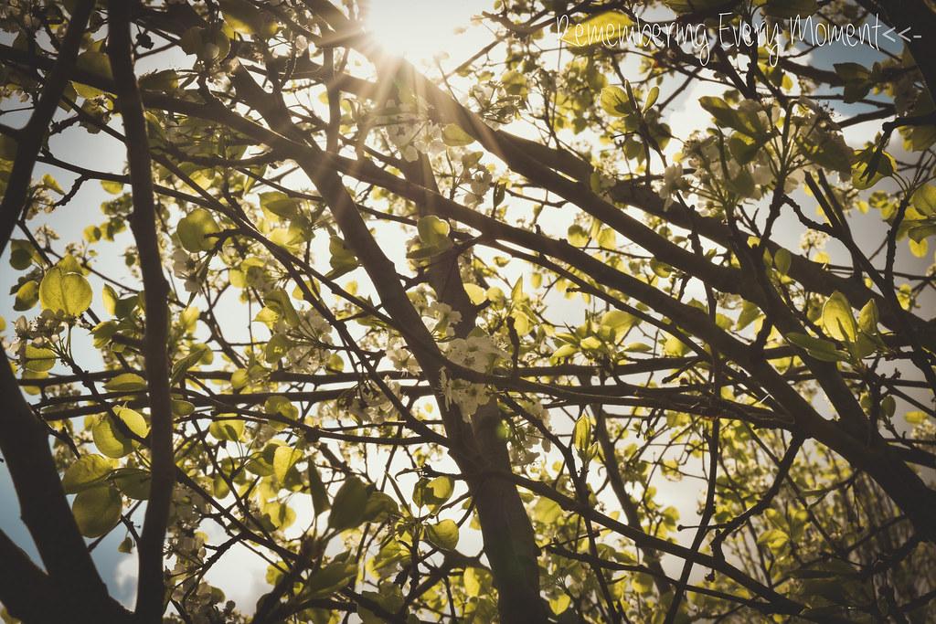 sitepicthingsinbloomandsunlight