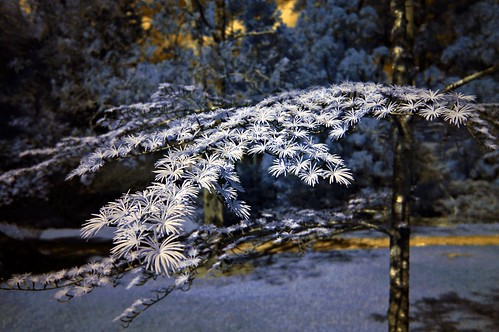 flowers tree bokeh sony northcarolina arboretum delicate nex