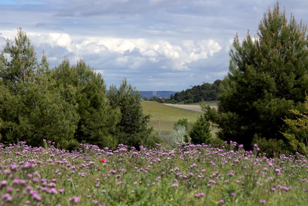 combinados de flores silvestres y otros paisajes de Valdemoro