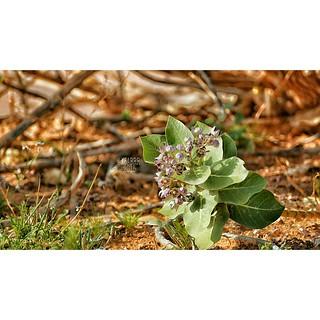 الصورة السابقة #بدون_أقتصاص #instashot #nocrop #بدون #اقتصاص #صورة #نباتات #زهور #صور #photo #plants #flowers  #plant #flower #ورد #ازهار #زهرة #وردة #photos #rose #roses #nature  #landscape  #summer #beautiful  #tree  #sony #a57 #zoom #300mm #PicsArt #Sn