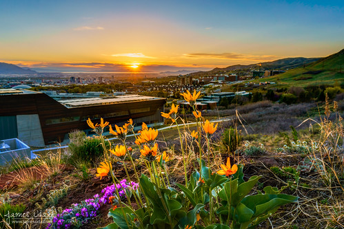 city flowers sunset sky usa sun mountains skyline utah spring scenery wasatch cityscape unitedstates scenic saltlakecity saltlake valley wildflowers slc universityofutah uofu jamesudall