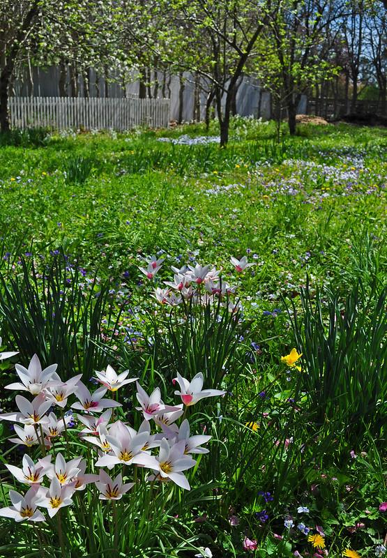Colonial Garden (8)