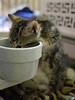 Office Kittens_03