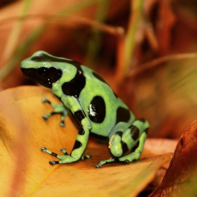 Indio Maiz reserve Nicaragua with Greenpathways