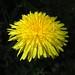Flowers #429 by tt64jp
