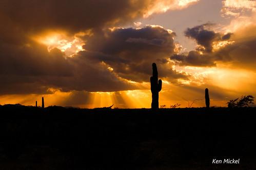 sunset arizona sunsets saguaro arizonadesert saguarocacti arizonaoutdoors