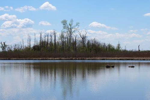 trees reflection nature water birds nest marsh delaware sanctuary smyrna saltmarsh bombayhook kentcounty nationalwildlife