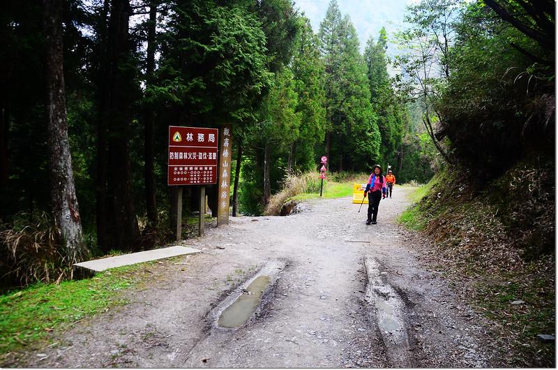 大鹿林道西線、榛山步道岔路口