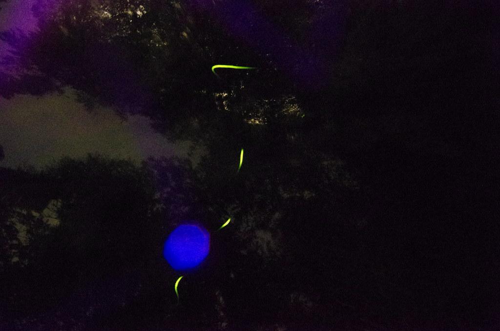 初次拍螢火蟲