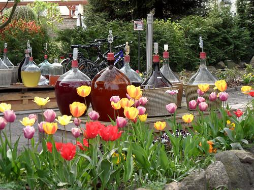 Blumen und Obstwein - 136. Baumblütenfest Werder 2015