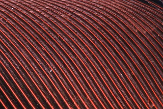 Cardinal feather detail