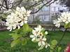Spring in Sevastopol
