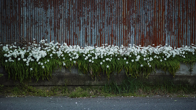 20150504_03_SIGMA dp3Q+FT-1201 SNAP
