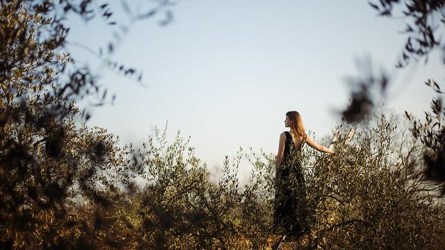 laura zalenga - tuscany morning