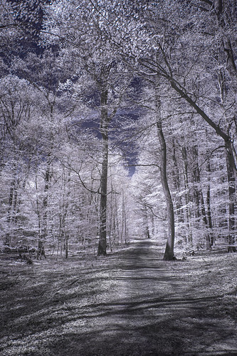 Infrared In The Woods.jpg
