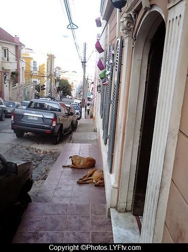 Valparaiso+chiens+rues