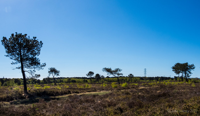 Upton Heath Panorama