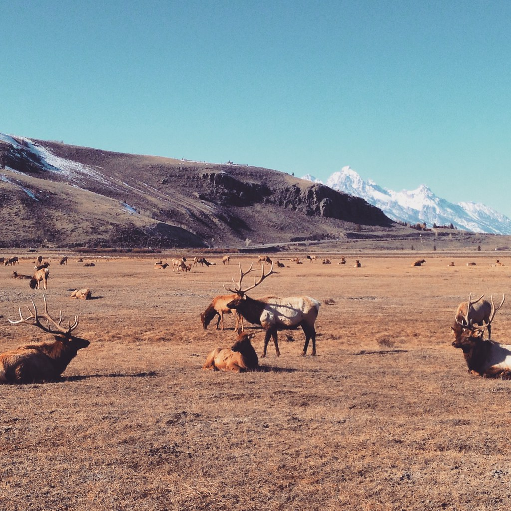 National Elk Refuge in Jackson
