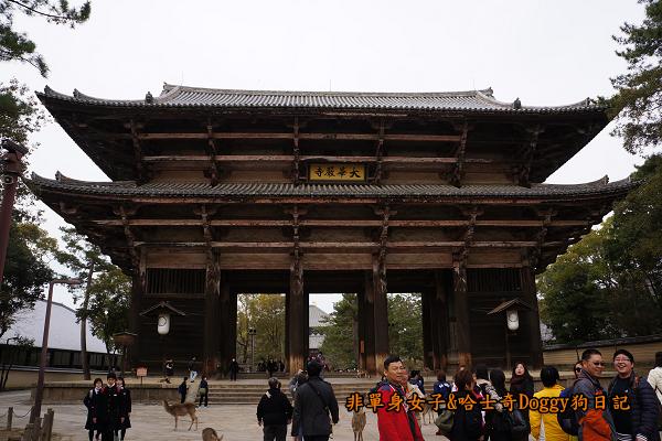 日本奈良公園東大寺23