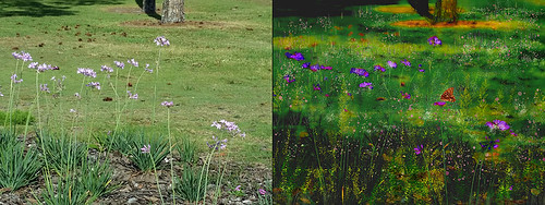 Original and Image Before Topaz Impression Filter applied