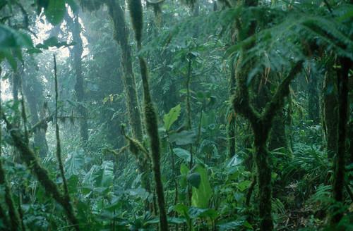Tropenwaldbild für Infotexte #holzvonhier