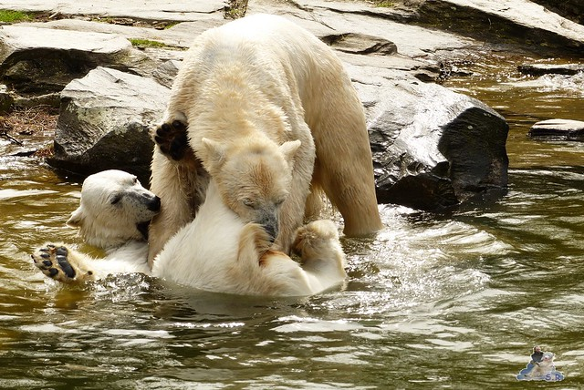 Tierpark Berlin 12.04.2015 213