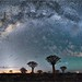 Quiver Tree Forest Mily Way by -Giep-