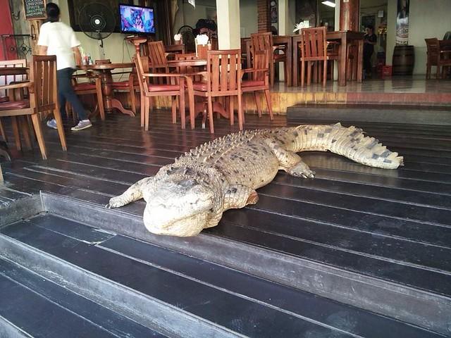bushtelegraph-croc-zomato