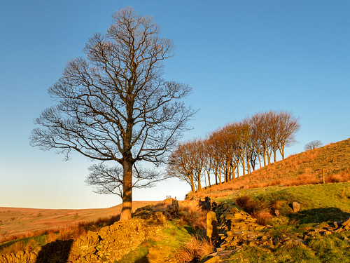 uk morning trees light england colour tree sunrise naked landscape gold dawn golden morninglight spring nikon northwest britain bare hill lancashire hills valley dslr moor magichour goldenhour pennines moorland rossendale helmshore haslingden d3200 musbury musburyvalley