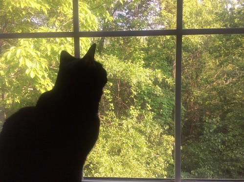 Martha #cat enjoys her new view