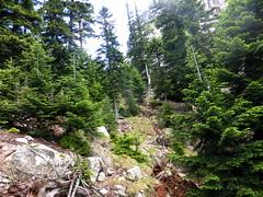 La forêt en arrivant sous Bocca Buvona