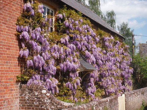 Wisteria-infested House, Waterstock