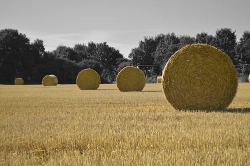 balle paille cotesdarmor bretagne champs blé foin agriculture d3200 nikon jaune or noirblanc blackwhite field meule plélo