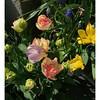 Spring bouquet :blossom::herb::tulip: